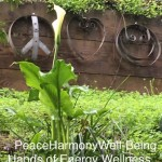 PeaceHarmonyWellBeing Feb2017